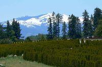 H3 Oregon 3